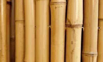 cañas de bambu baratas